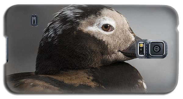 Long-tailed Stare Galaxy S5 Case