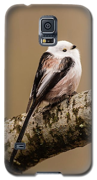 Long-tailed Tit On The Oak Branch Galaxy S5 Case