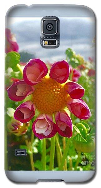 Look At Me Dahlia Galaxy S5 Case by Susan Garren
