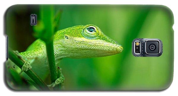Look Up Lizard Galaxy S5 Case