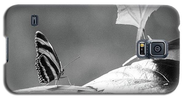 Looking Ahead Galaxy S5 Case