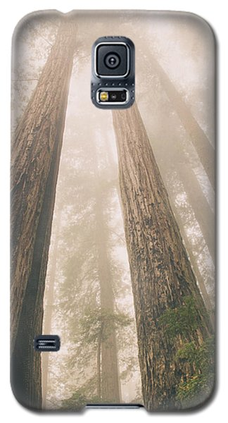 Looking At Giants Galaxy S5 Case