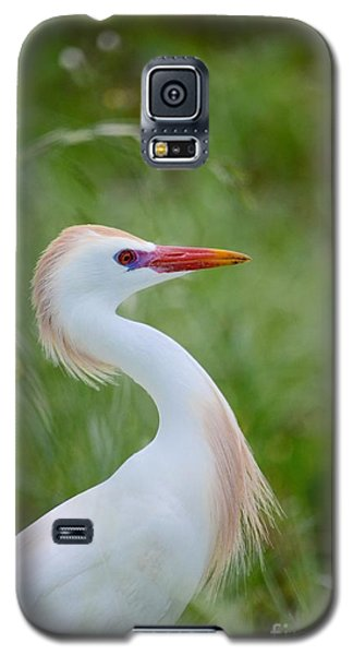 Looking For A Mate Galaxy S5 Case by Kathy Gibbons
