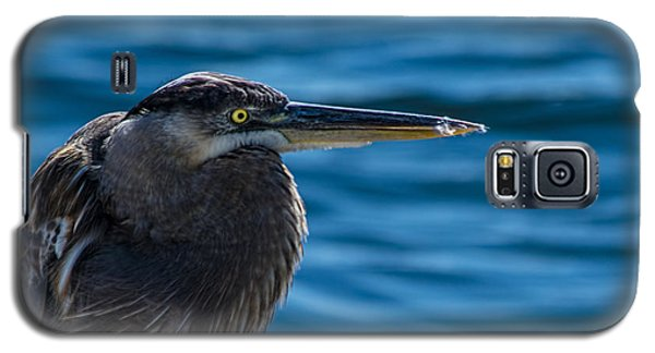 Looking For Lunch Galaxy S5 Case by Marvin Spates