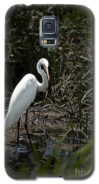 Galaxy S5 Case featuring the photograph Looking For Lunch by Tamyra Ayles