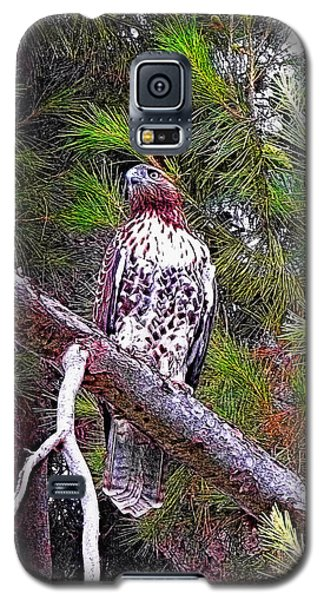 Looking For Prey - Red Tailed Hawk Galaxy S5 Case