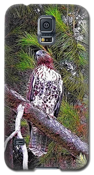 Looking For Prey - Red Tailed Hawk Galaxy S5 Case by Glenn McCarthy Art and Photography