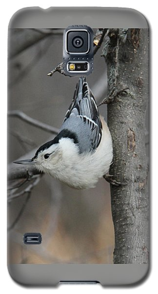 Looking For Seeds Galaxy S5 Case by Doris Potter