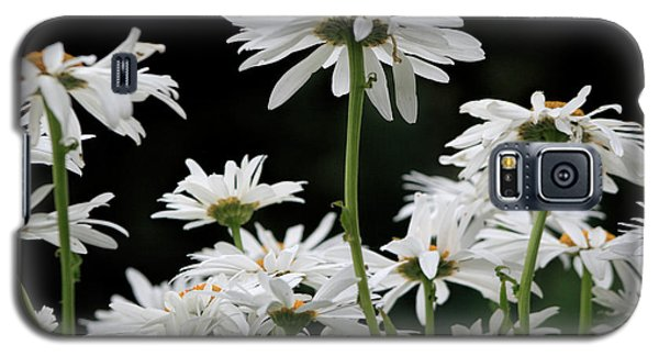 Looking Up At At Daisies Galaxy S5 Case by Dorothy Cunningham