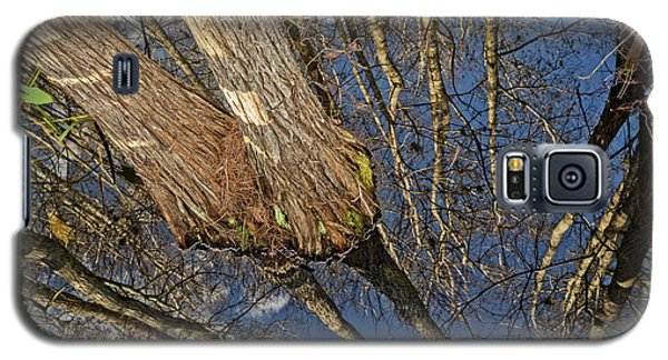Galaxy S5 Case featuring the photograph Looking Up While Looking Down by Debra and Dave Vanderlaan