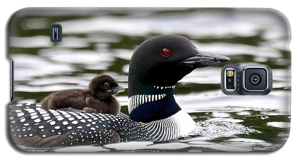 Loon Galaxy S5 Case - Loon Chick by Peter Gray