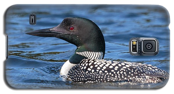 Loon Close Up Galaxy S5 Case