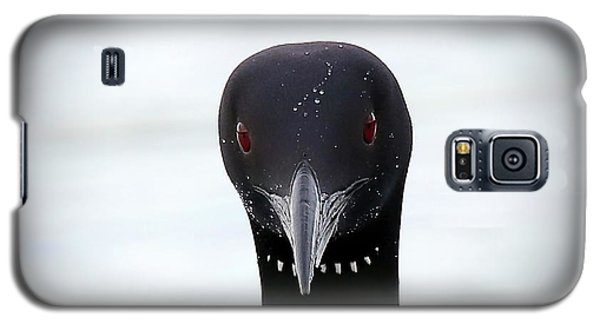 Loon Stare Galaxy S5 Case by Peter Gray