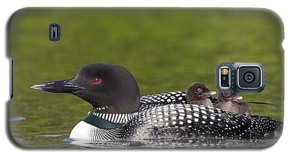 Loon Taxi Galaxy S5 Case