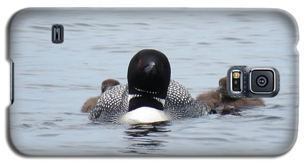 Loon With Chicks Galaxy S5 Case