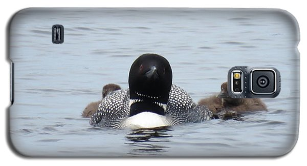 Loon With Chicks Galaxy S5 Case by Sandra LaFaut