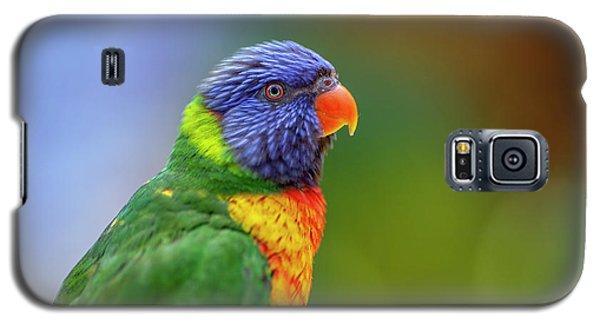 Lorikeet 2 Galaxy S5 Case