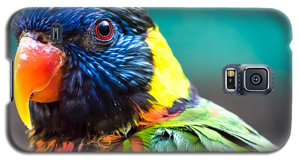 Lorikeet Glance Galaxy S5 Case
