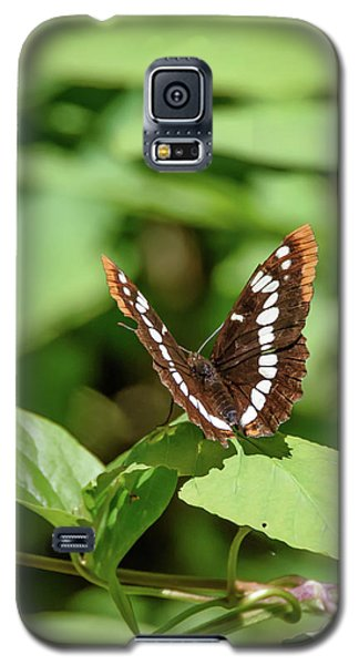 Lorquin's Admiral Butterfly Galaxy S5 Case