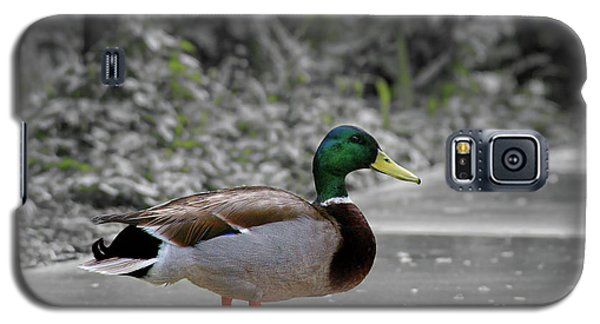 Galaxy S5 Case featuring the photograph Lost Duck by Mariola Bitner