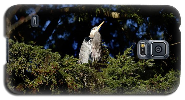 Galaxy S5 Case featuring the photograph Lost Lagoon Great Blue Heron 5 by Terry Elniski