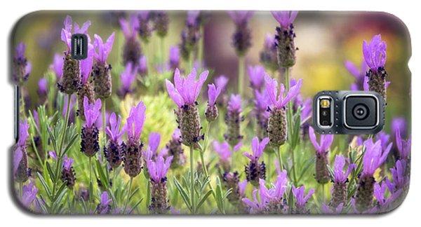 Galaxy S5 Case featuring the photograph Lots Of Lavender  by Saija Lehtonen