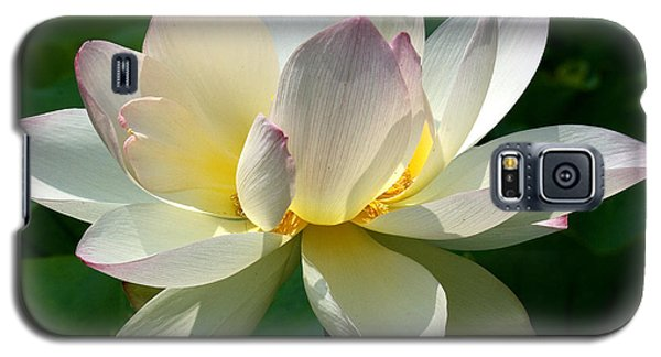 Lotus Beauty--disheveled Dl061 Galaxy S5 Case