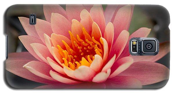 Lotus Flower Galaxy S5 Case by Ana V Ramirez