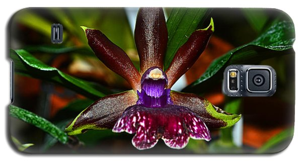 Galaxy S5 Case featuring the photograph Louisendorf Rhein Moonlight Orchid 002 by George Bostian