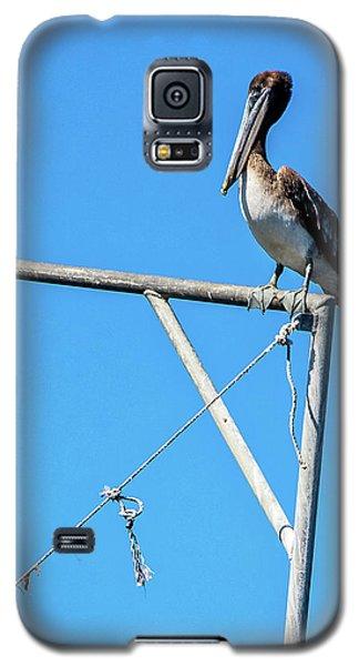 Louisiana's State Bird Galaxy S5 Case