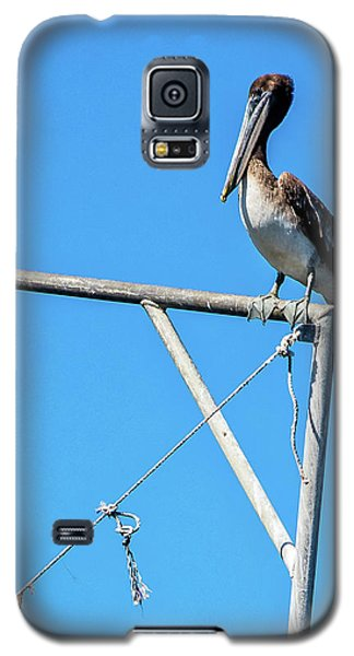 Louisiana's State Bird Galaxy S5 Case