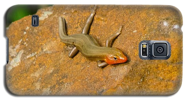 Galaxy S5 Case featuring the photograph Lounging Lizard by Rand Herron