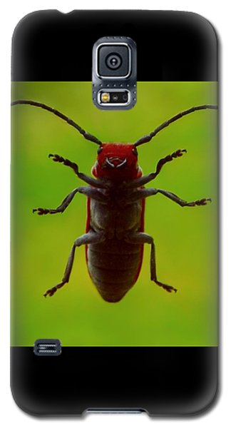 Galaxy S5 Case featuring the photograph Love Bug by Danielle R T Haney
