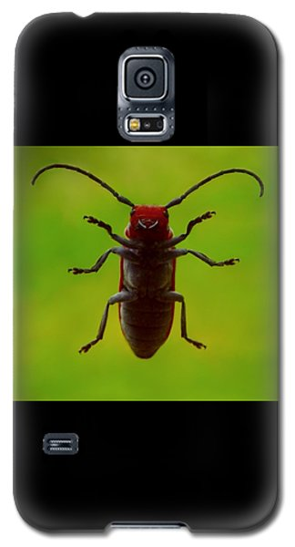 Love Bug Galaxy S5 Case by Danielle R T Haney