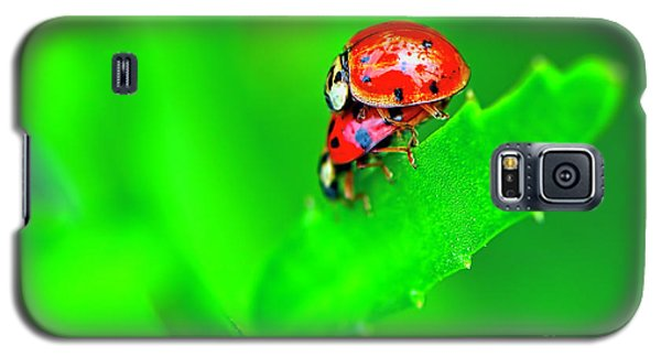 Galaxy S5 Case featuring the photograph Love Bugs by Sharon Talson