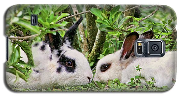 Love Bunnies In Costa Rica Galaxy S5 Case by Peggy Collins