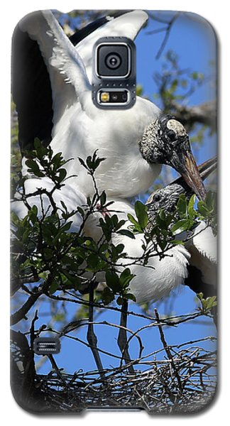 Love Is In The Air Galaxy S5 Case by Lamarre Labadie