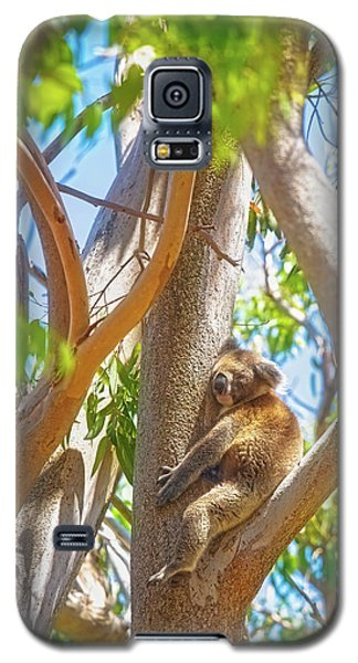 Galaxy S5 Case featuring the photograph Love My Tree, Yanchep National Park by Dave Catley