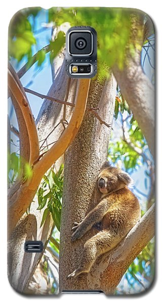 Love My Tree, Yanchep National Park Galaxy S5 Case by Dave Catley