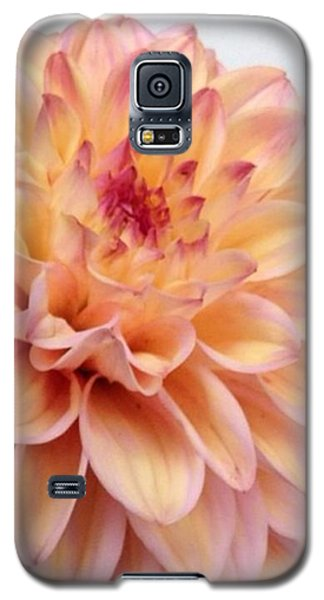 Floral Galaxy S5 Case - Dahlia Flower Bouquet by Blenda Studio