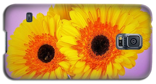 Lovely And Beautiful - Gerbera Daisies Galaxy S5 Case