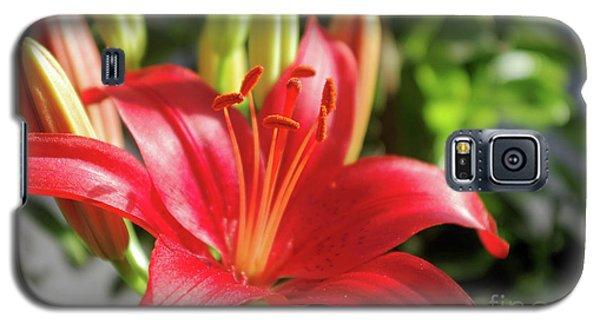 Lovely Flower Galaxy S5 Case