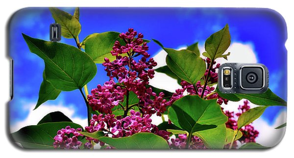Lovely Lilac Blooms Galaxy S5 Case by Alexas Fotos