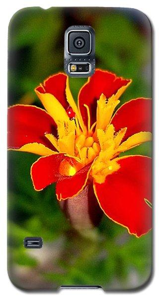 Lovely Little Flower Galaxy S5 Case