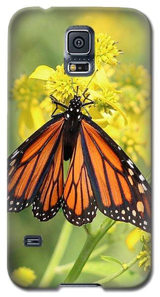 Lovely Monarch Galaxy S5 Case by Anita Oakley