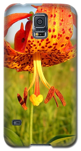 Lovely Orange Spotted Tiger Lily Galaxy S5 Case