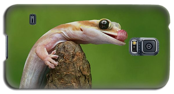 Galaxy S5 Case featuring the photograph Lovely Water - Velvet Gecko by Nikolyn McDonald