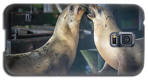 Harbor Seals Lovers Quarrel Galaxy S5 Case by James Hammond