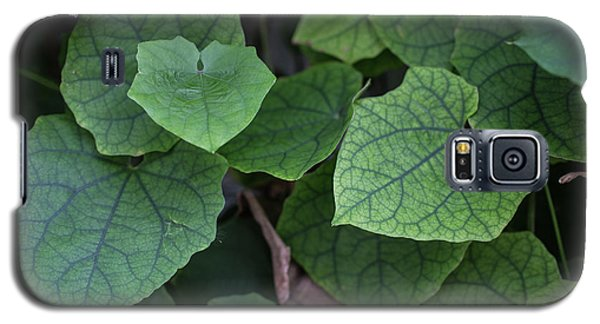 Galaxy S5 Case featuring the photograph Low Key Green Vines by Jingjits Photography