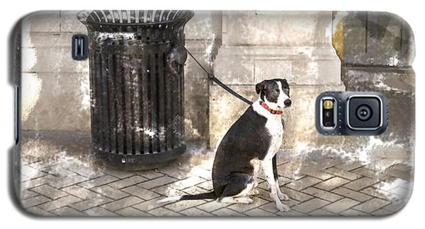 Loyal Dog Galaxy S5 Case
